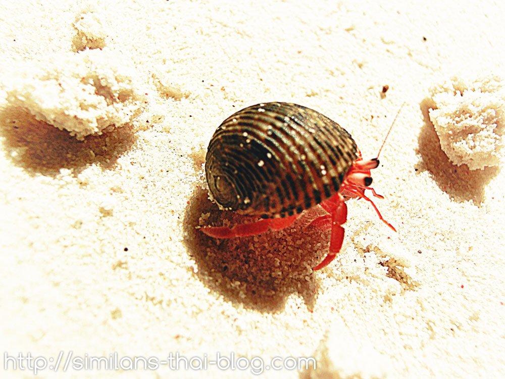 cute-crab