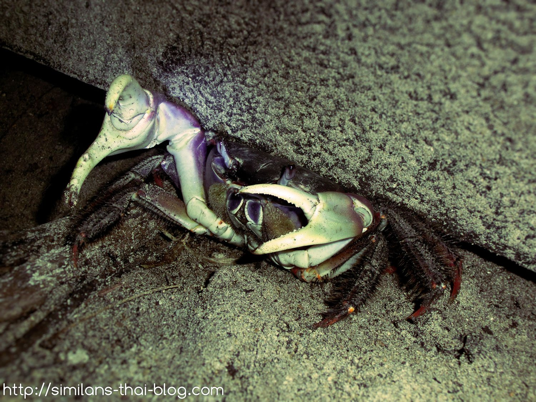 similan-chicken-crab-03
