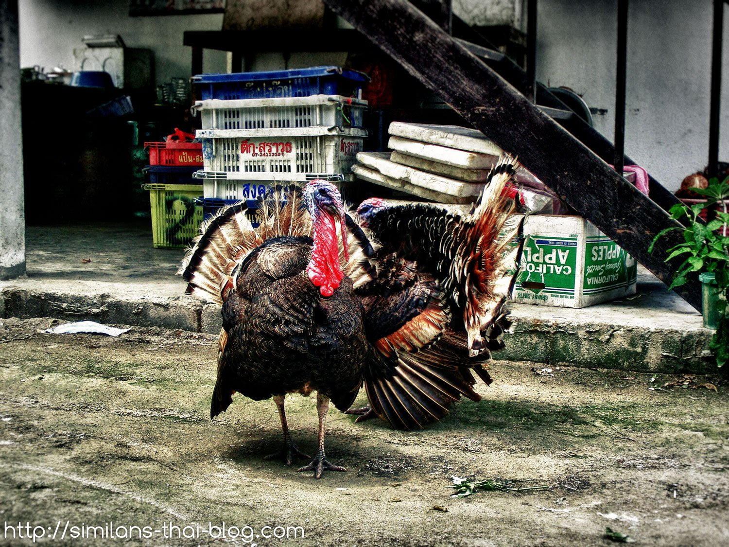 thai-turkey