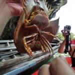 Tiere in Thailand